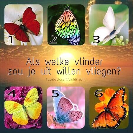boodschappen vlinders