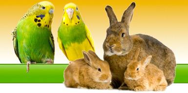 003-diertotaal-konijn-vogel