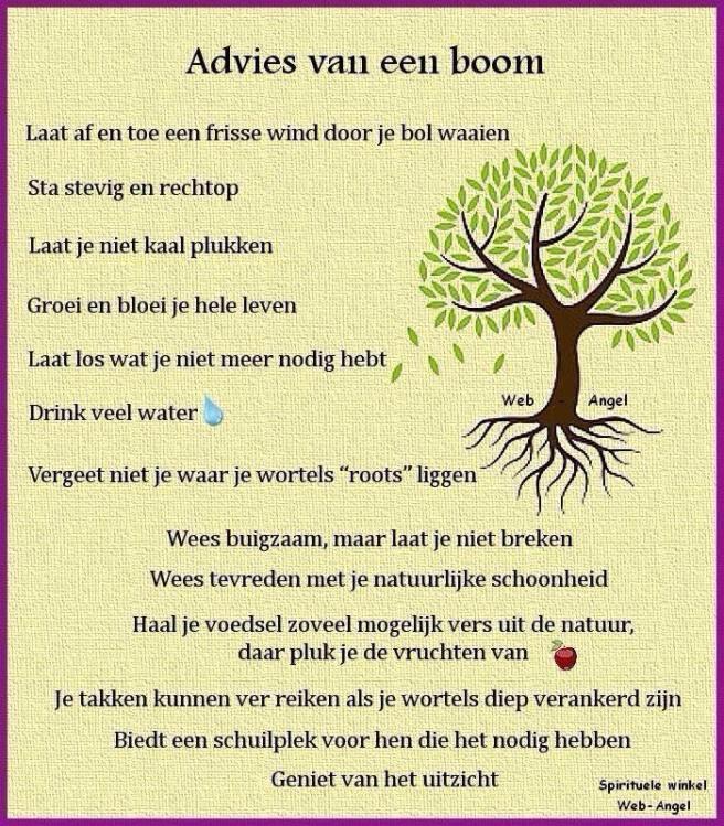 wijsheid boom